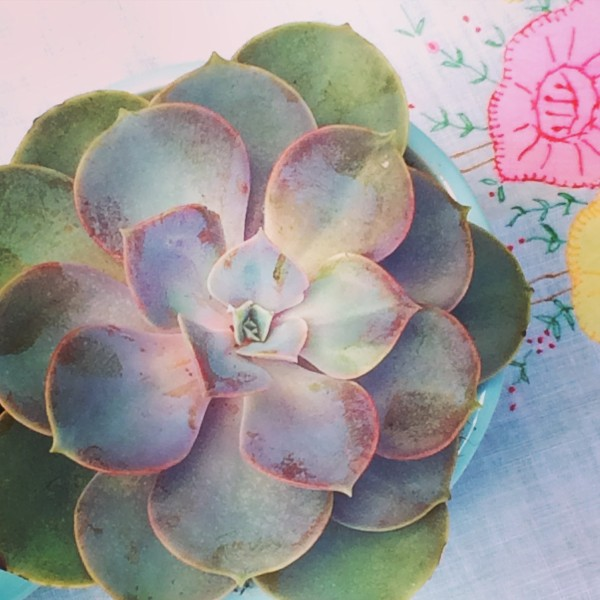 New Book - Crocheted Succulents - image succulents.6.15 on https://knitting-crocheting-yarn.com