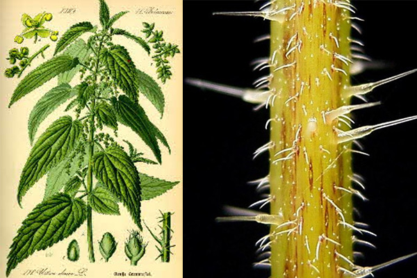 Know Your Fibre – Nettle - image Untitled-2 on https://knitting-crocheting-yarn.com