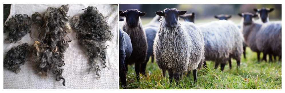 Know Your Sheep – Gotland - image Gotland_002 on https://knitting-crocheting-yarn.com